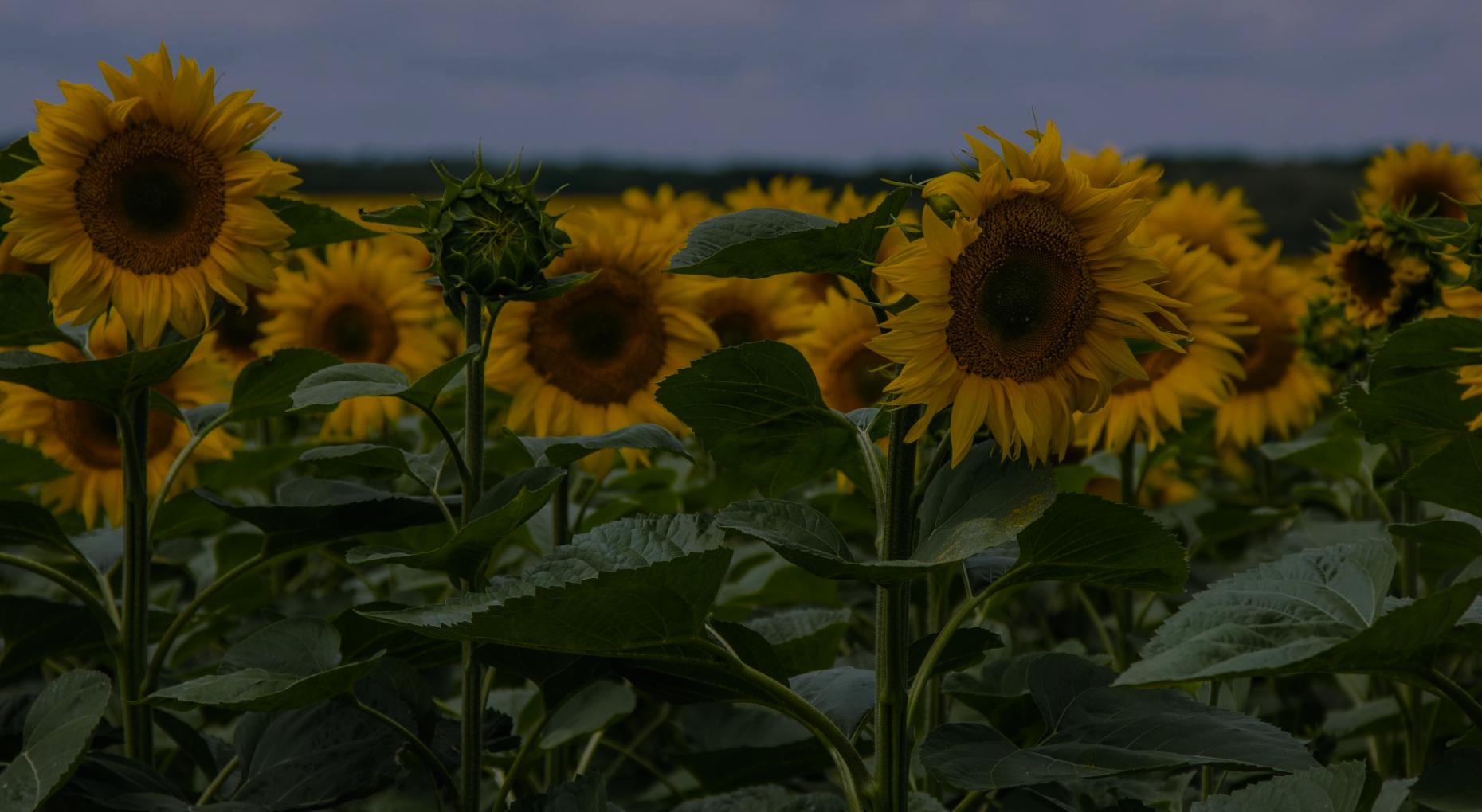 Агротехнологічна підтримка
