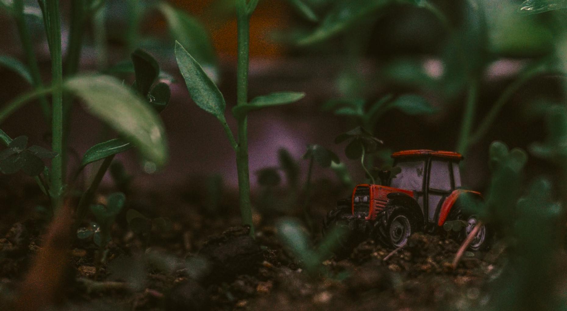 У межах проєкту <br> ми надаємо корисні та дієві сервіси для аграріїв